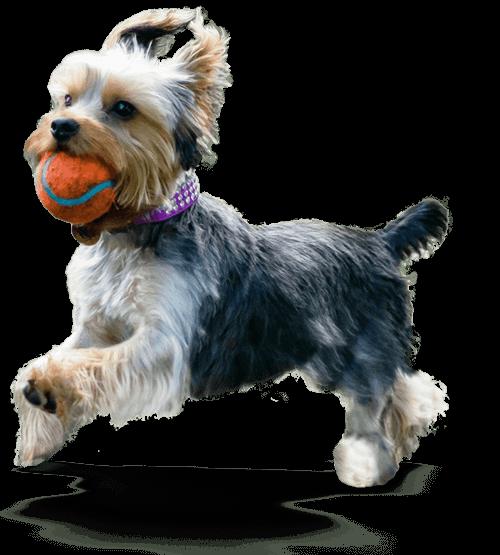 Bonnie Puppy